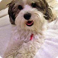 Adopt A Pet :: Oreo - Toronto, ON