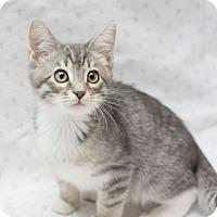 Adopt A Pet :: Minko - Fountain Hills, AZ
