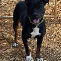 Adopt A Pet :: Buddy - Gainesville, GA