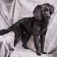 Adopt A Pet :: LUCKY - Anna, IL