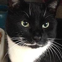 Adopt A Pet :: CJ - Washingtonville, NY
