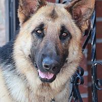 Adopt A Pet :: Thunder von Thum - Los Angeles, CA