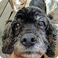Adopt A Pet :: Toby K 17056 - Parker, CO