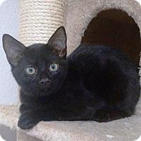 Adopt A Pet :: Amos - Riverside, CA
