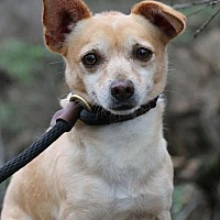 Adopt A Pet :: Jocko - Fillmore, CA