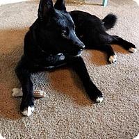 Adopt A Pet :: Aliko *Good with CATS!* - Tucson, AZ