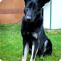 Adopt A Pet :: Diesel *In Foster* - Appleton, WI