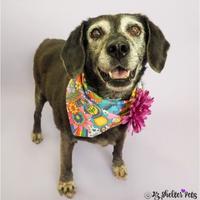 Adopt A Pet :: Mary Puppins - Phoenix, AZ