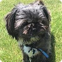 Adopt A Pet :: Buddy Boy-Pending Adoption - Omaha, NE