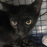 Adopt A Pet :: SIMON - St. Thomas, VI