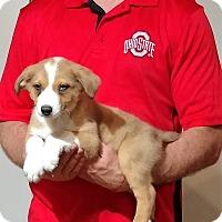 Adopt A Pet :: Maximus - South Euclid, OH
