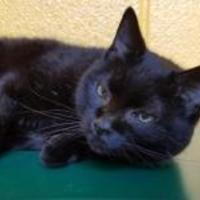 Adopt A Pet :: Lady - Williamsport, PA
