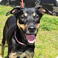 Adopt A Pet :: Aylin - Westport, CT