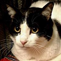 Adopt A Pet :: Kala - Salem, OR
