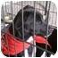 Photo 3 - Terrier (Unknown Type, Small) Mix Dog for adoption in Fresno, California - Duke