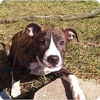 Adopt A Pet :: Madisyn - Silver Lake, WI