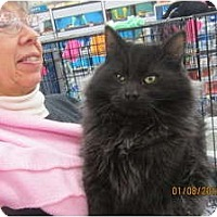 Adopt A Pet :: Megee - Sterling Hgts, MI