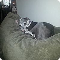 Adopt A Pet :: Spencer - OC - Costa Mesa, CA