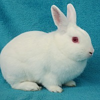 Adopt A Pet :: Calvin - Los Angeles, CA