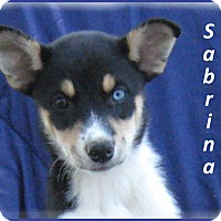 Adopt A Pet :: Sabrina - Marlborough, MA