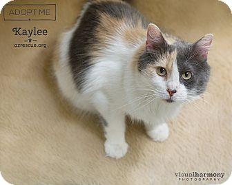 Calico Cat for adoption in Phoenix, Arizona - Kaylee