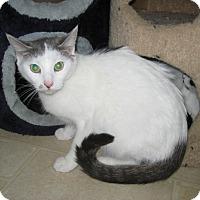 Adopt A Pet :: Thunder - Jefferson, NC