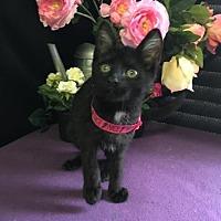 Adopt A Pet :: Meenie - Fayetteville, GA