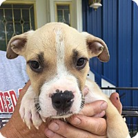Adopt A Pet :: Eddie (Wendy- Blossvale) - Blossvale, NY