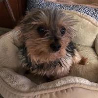 Adopt A Pet :: Jessie - Prole, IA