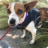 Adopt A Pet :: Brazil - Hamilton, ON