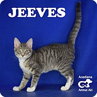 Adopt A Pet :: Jeeves - Carencro, LA