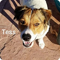 Clumber Spaniel Mix Dog for adoption in Higley, Arizona - Tess