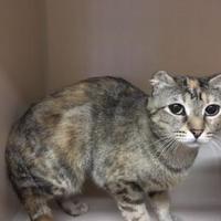 Adopt A Pet :: Tic Tac - Fort Collins, CO