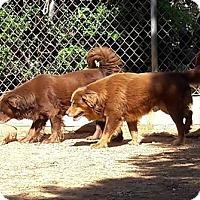 Adopt A Pet :: Rusty & Trusty - Marion, AL