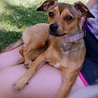Adopt A Pet :: Ida - Germantown, OH