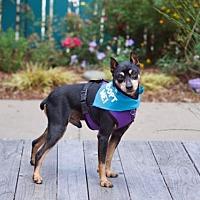 Adopt A Pet :: Winston - Pacific Grove, CA