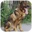 Photo 1 - German Shepherd Dog Mix Dog for adoption in Los Angeles, California - Boris von Lancaster