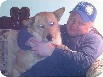 Corgi Mix Dog for adoption in New Brighton, Minnesota - Caleb