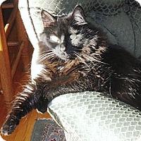 Adopt A Pet :: Isabella - Kalamazoo, MI