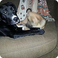 Adopt A Pet :: Tramp - East Rockaway, NY