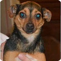 Adopt A Pet :: CiCi - Greensboro, NC