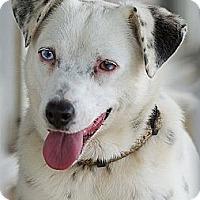 Adopt A Pet :: Polar Bear - Providence, RI