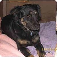 Adopt A Pet :: Leah - Scottsdale, AZ