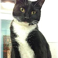 Adopt A Pet :: Violet - Huntington, NY