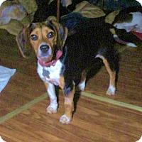 Adopt A Pet :: PENELOPE - Williston Park, NY