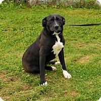 Adopt A Pet :: Chickie-042815k - Tupelo, MS