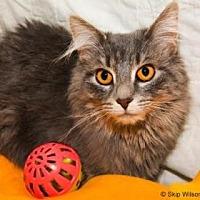 Adopt A Pet :: Shadow - Neenah, WI