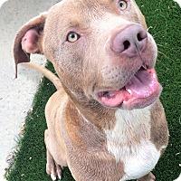 Adopt A Pet :: King - Chula Vista, CA