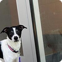 Adopt A Pet :: Howard - Wichita, KS