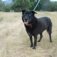 Adopt A Pet :: Lady - Ridgway, CO
